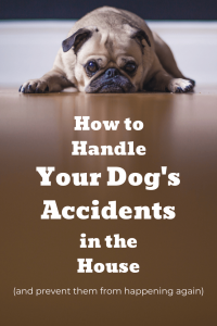 how to handle your dog's accidents in the house