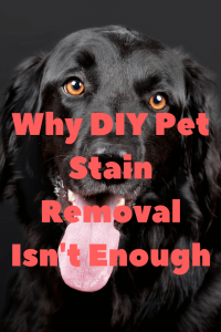 why diy pet stain removal isn't enough