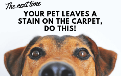 The Next Time Your Pet Leaves A Stain On The Carpet, Do This