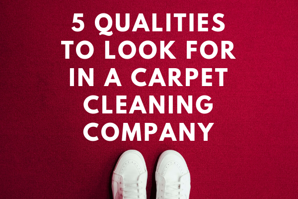 5 qualities to look for in a carpet cleaning company graphic