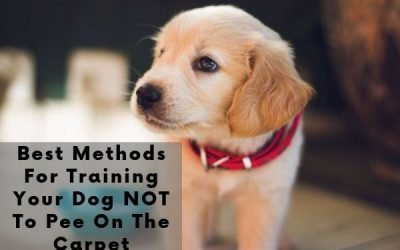 Best Methods For Training Your Dog NOT To Pee On The Carpet