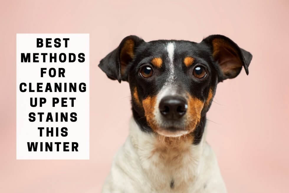 Best Methods For Cleaning Up Pet Stains This Winter